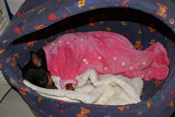 MAGNUM endormi (28 décembre 2009) Magnum14
