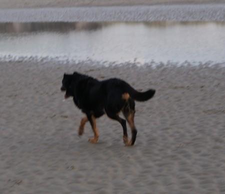 Il est libre... MAX (28 décembre 2009) Max-pl17