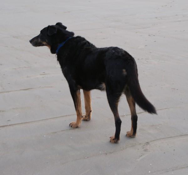 Il est libre... MAX (28 décembre 2009) Max-pl20