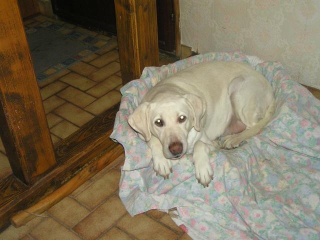 1 mois pour la sauver de l'euthanasie ! Perle210