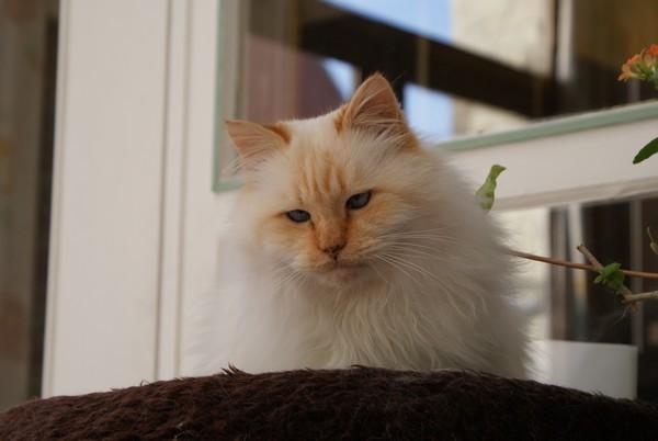 Après-midi chez Mamie (19 décembre 2009) Phoebu10
