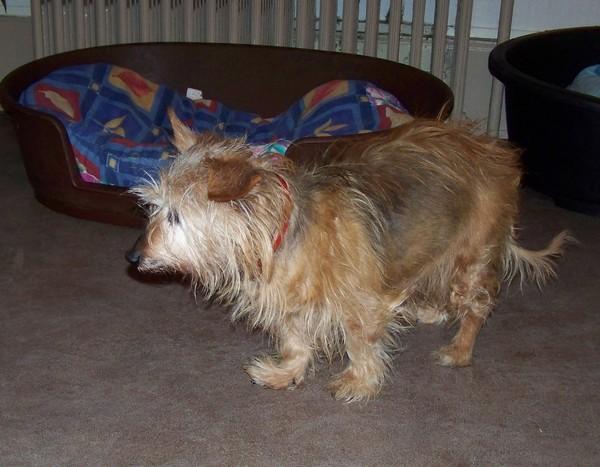 Visite vétérinaire (18 janvier 2010) Rata-d10