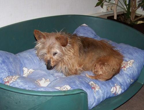 Visite vétérinaire (18 janvier 2010) Rata-p10