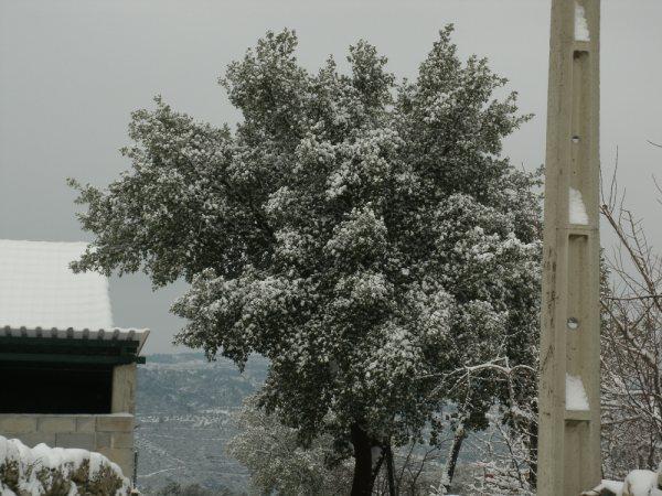 Castedo Branquinho/ Neve - Página 3 Foto510