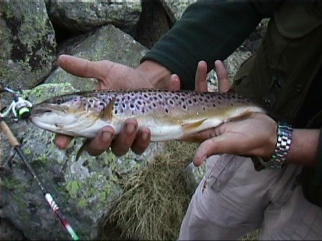 Sortie toc / Mai 2007 - Page 4 Fisch10