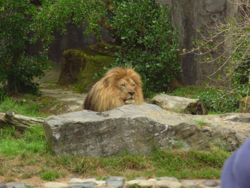 My Visit To San Francisco Zoo Dscn2112