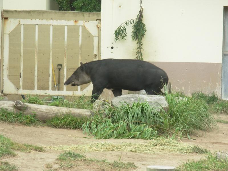 My Visit To San Francisco Zoo Dscn2113