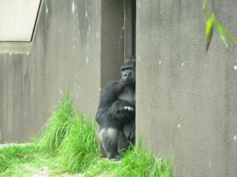 My Visit To San Francisco Zoo Dscn2210