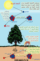 كيفيه استخدام الكربون 14 فى حساب العمر D9a6b710
