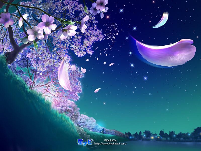 pink wind night time Pw_nig10