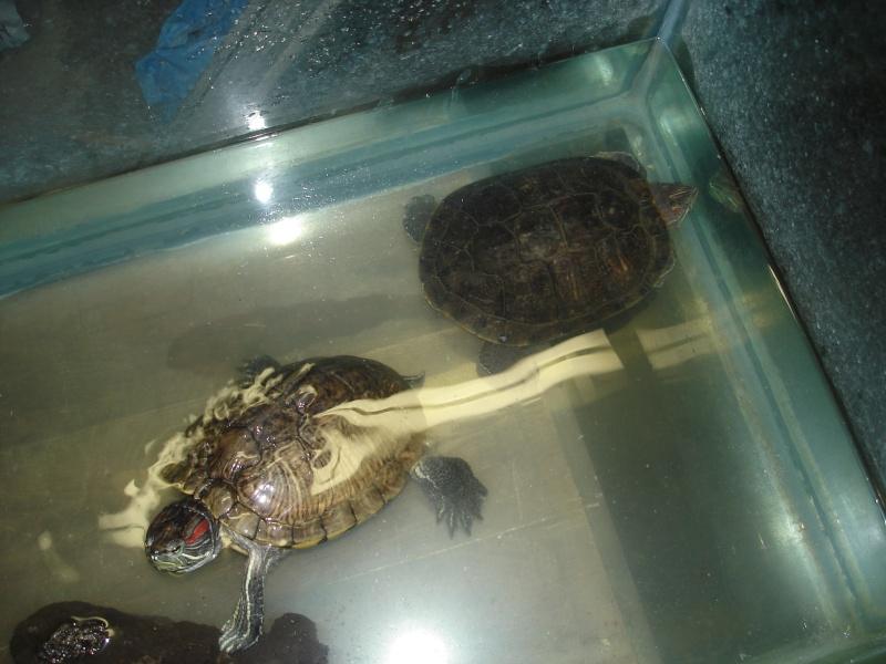 Nourriture pour tortue de floride - Bassin tortue floride strasbourg ...