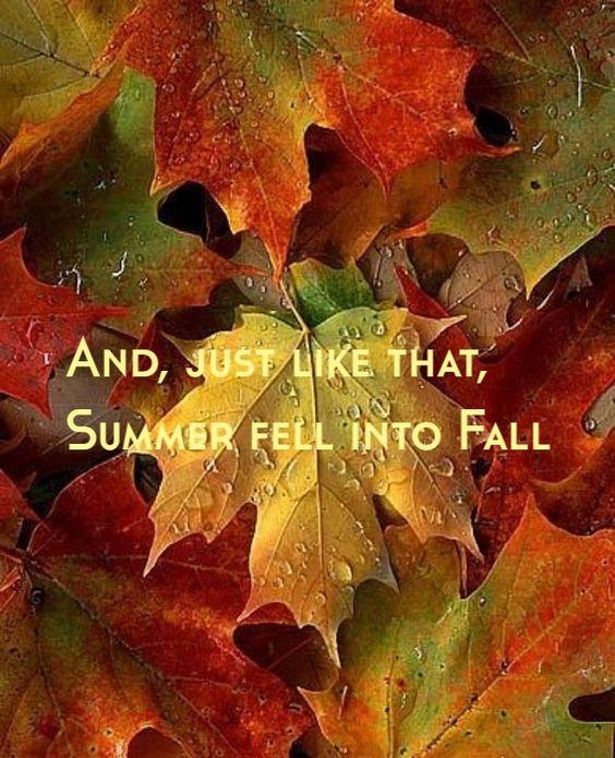 Autumn - Page 5 1g133
