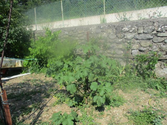 Quel est cette plante? - Page 2 Img_2110