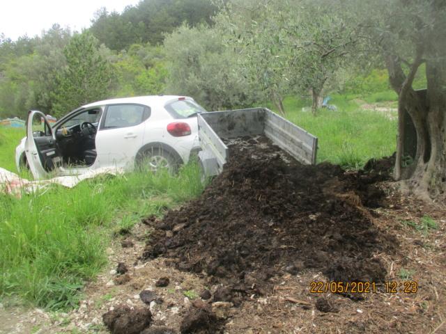 Les oliviers de Elie henry. Img_2226