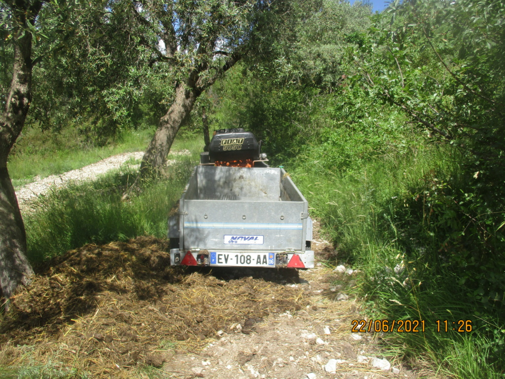 Les oliviers de Elie henry. Img_2234