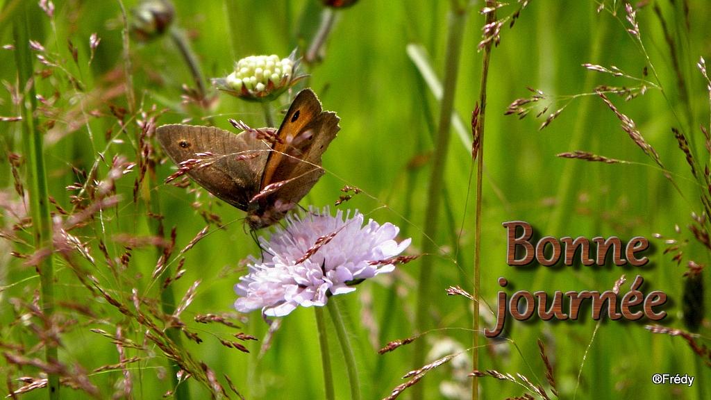 Semaine du 20 au 26 Aout 20120713