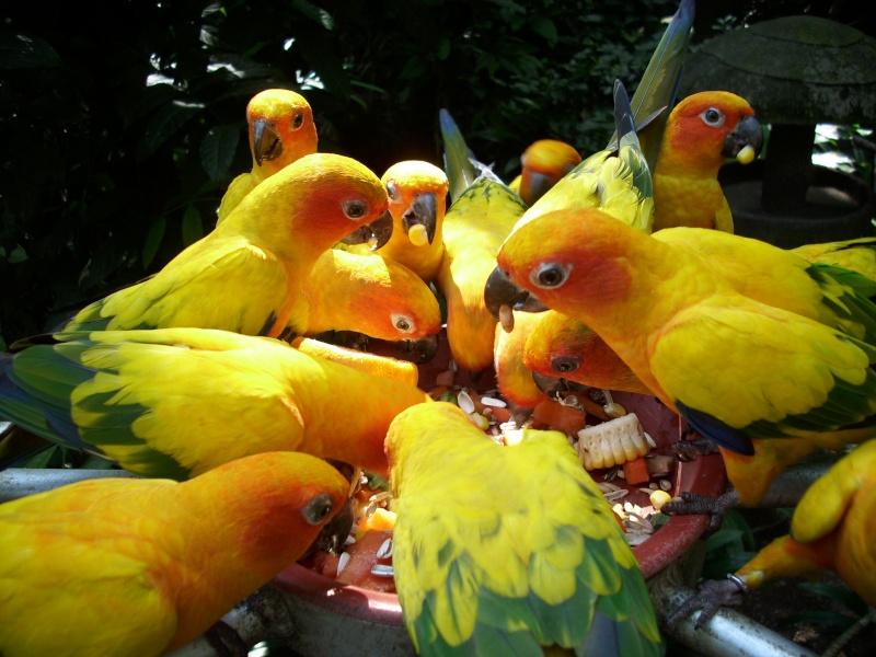 Visite au Jurong Bird Park à Singapour Krabi_29