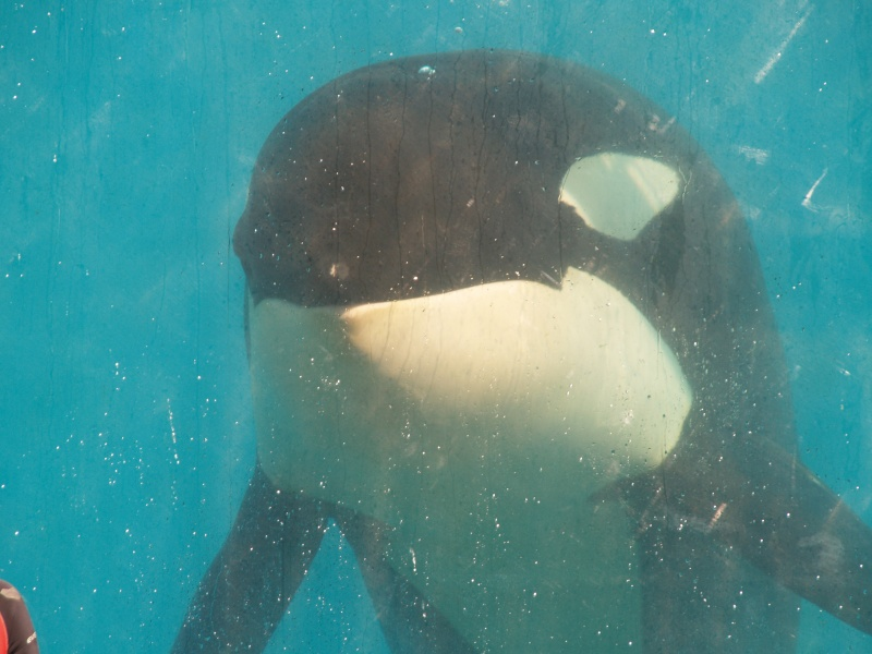[Photos] Orques aux vitres - Page 2 P1012510