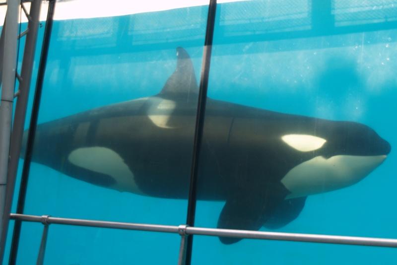 [Photos] Orques aux vitres - Page 2 P1012610