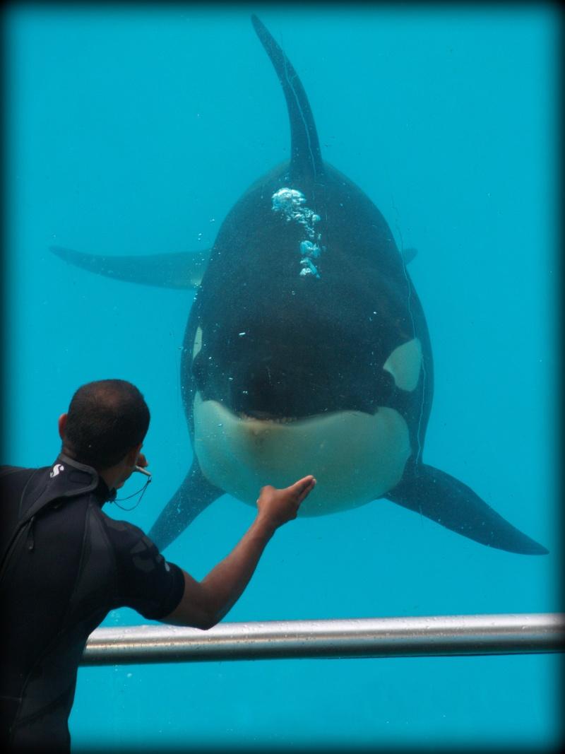 [Photos] Orques aux vitres - Page 2 P1012810