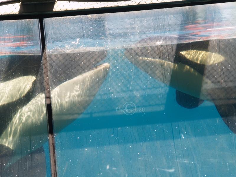 [Photos] Orques aux vitres - Page 2 P1013310
