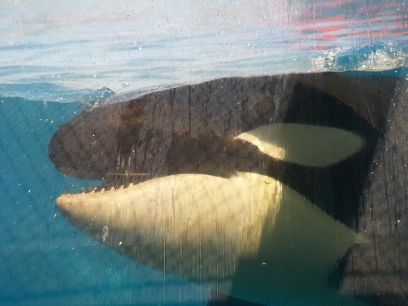 [Photos] Orques aux vitres - Page 2 P1013311