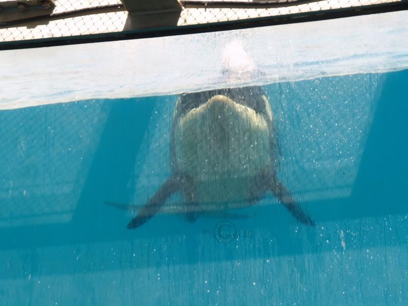 [Photos] Orques aux vitres - Page 2 P1013312
