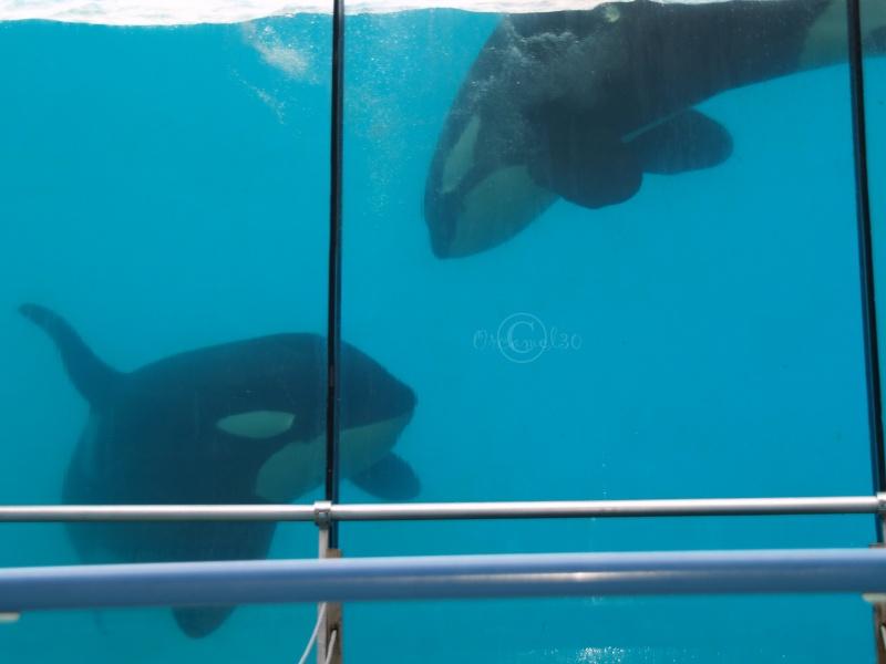 [Photos] Orques aux vitres - Page 2 P1013510