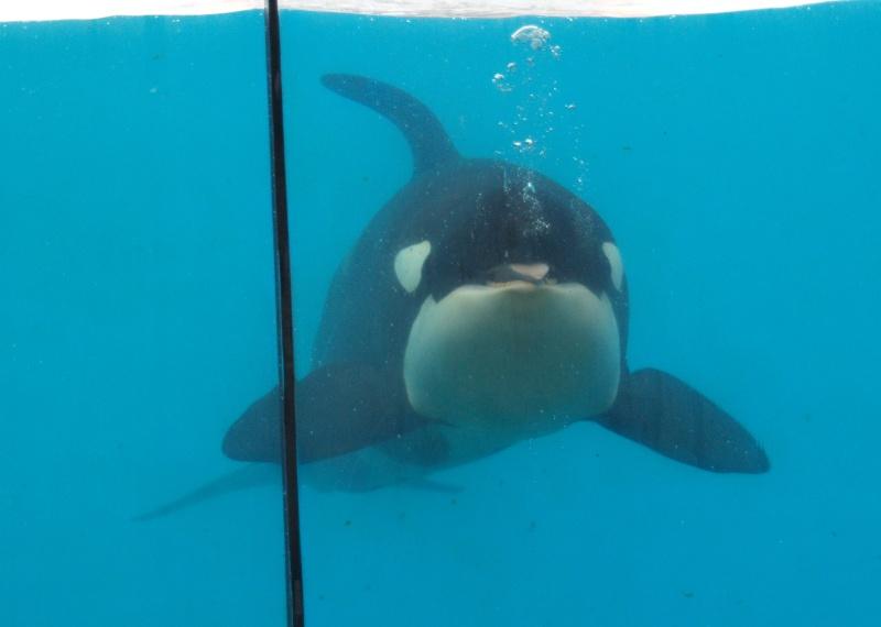 [Photos] Orques aux vitres - Page 2 P1013610
