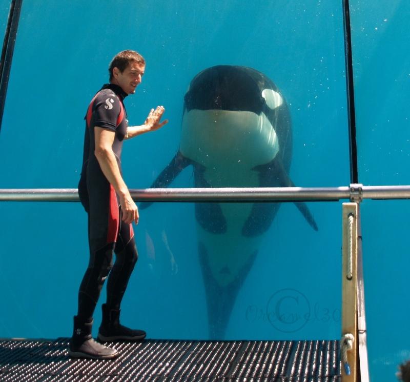 [Photos] Orques aux vitres - Page 2 P1013710