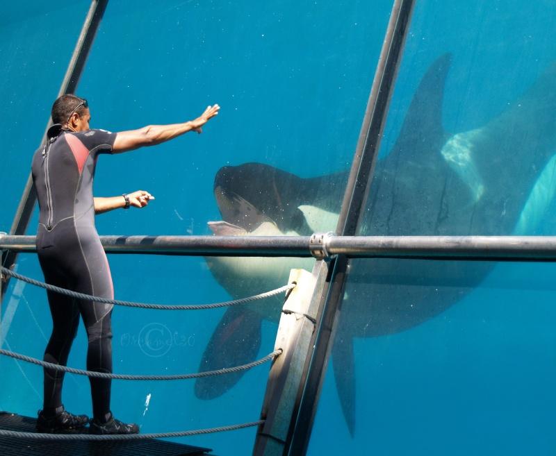 [Photos] Orques aux vitres - Page 2 P1013711