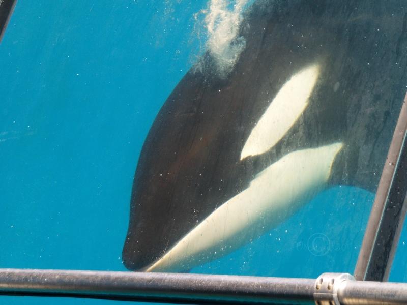[Photos] Orques aux vitres - Page 2 P1013810