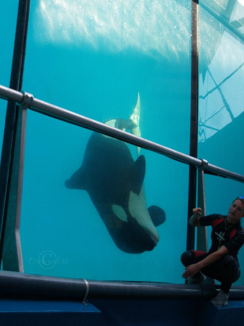 [Photos] Orques aux vitres - Page 2 P1013811