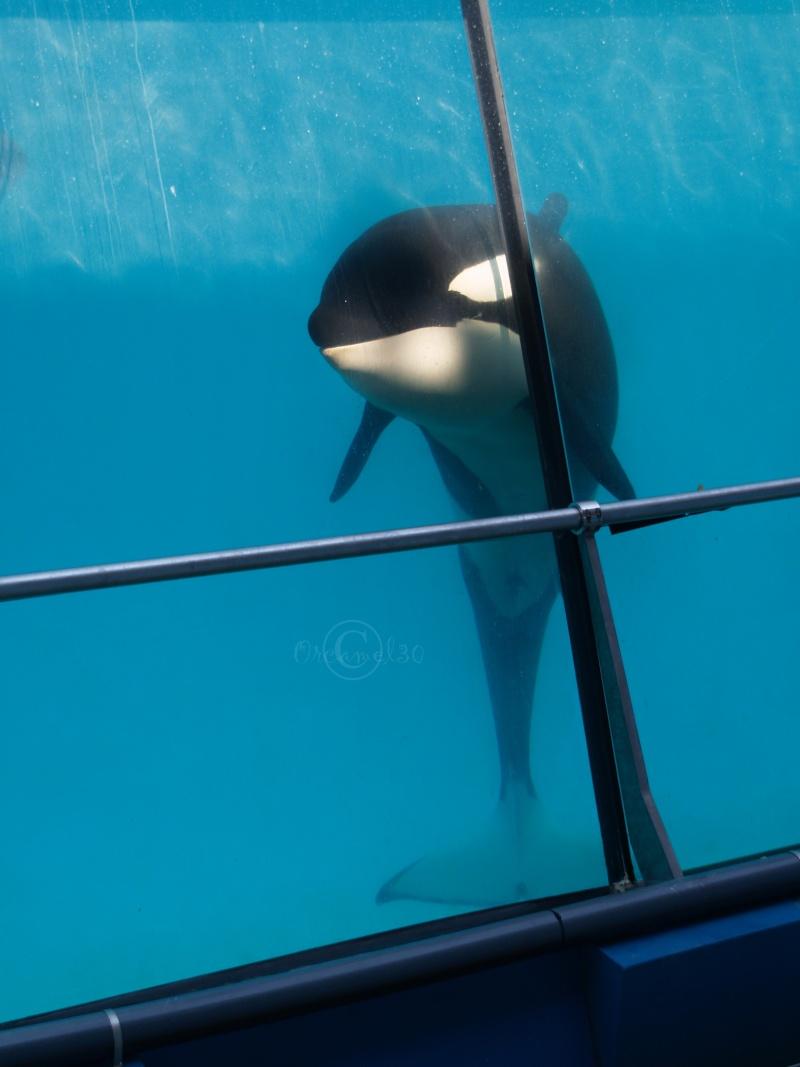 [Photos] Orques aux vitres - Page 2 P6093910
