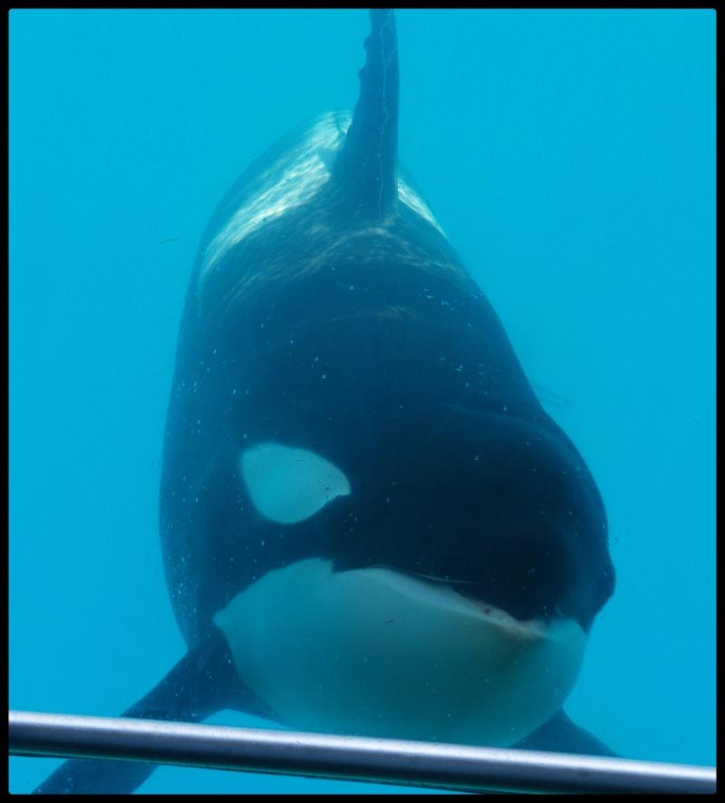 [Photos] Orques aux vitres - Page 2 P6094010