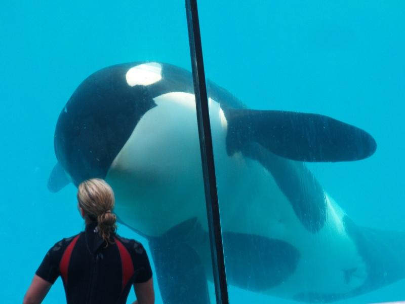 [Photos] Orques aux vitres - Page 2 P6094012