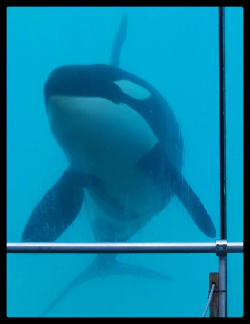 [Photos] Orques aux vitres - Page 2 P6094013