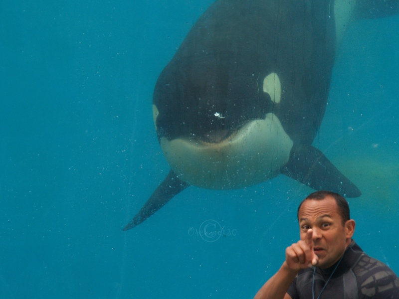 [Photos] Orques aux vitres - Page 2 P6094110