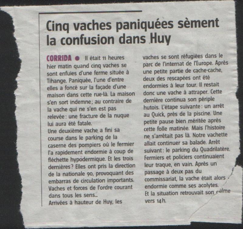 Réunion à Ben Ahin (Liège) le 25/01/10 - Page 3 Vaches10