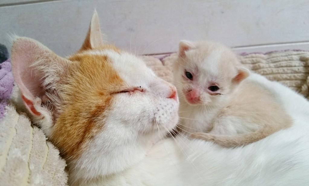 La face cachée de l'Ecole du chat de Quiberon - Page 9 59884710