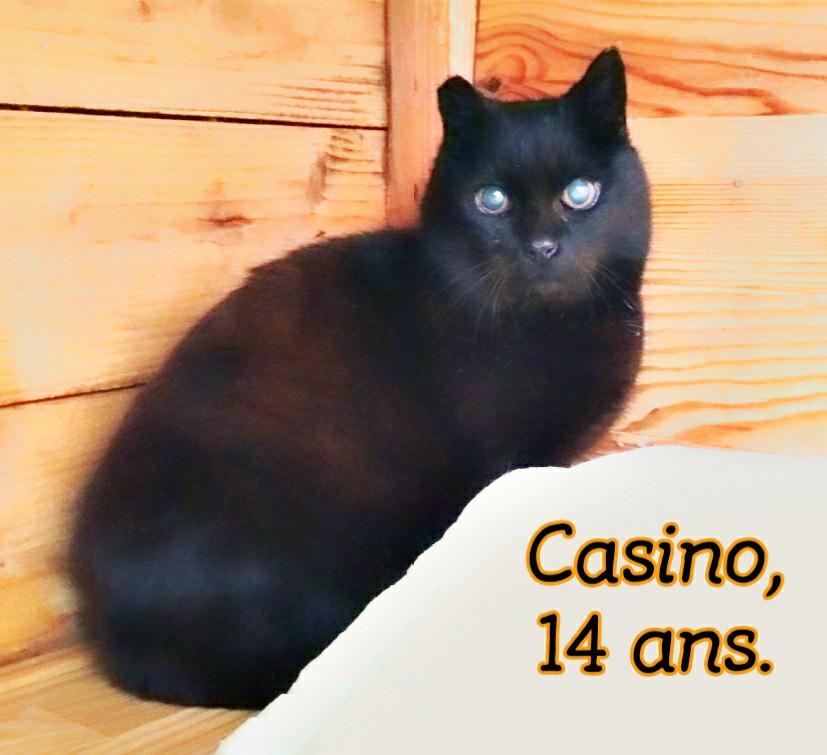 CASINO --> FIV + Casino10