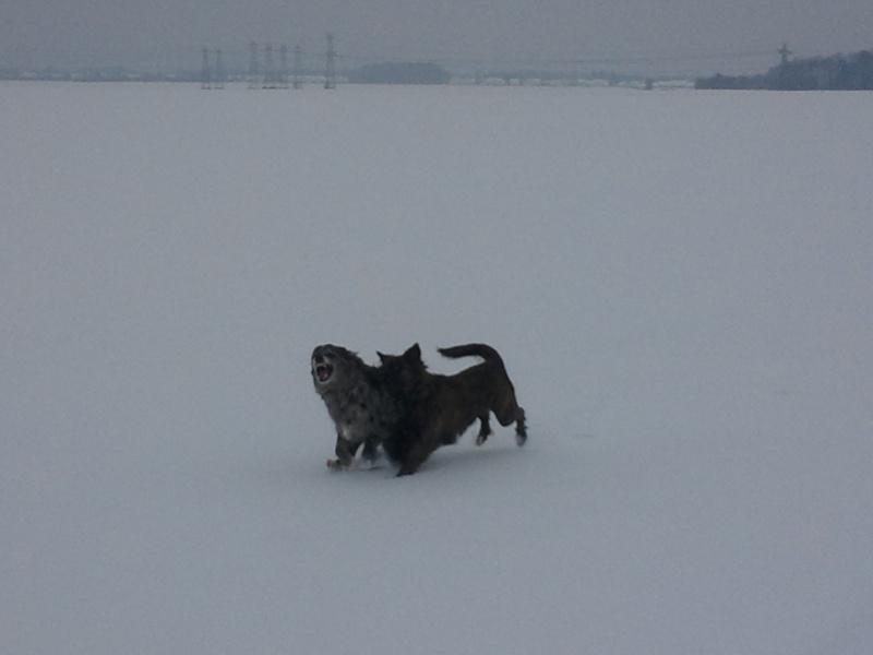 Vive la neige Img_2012