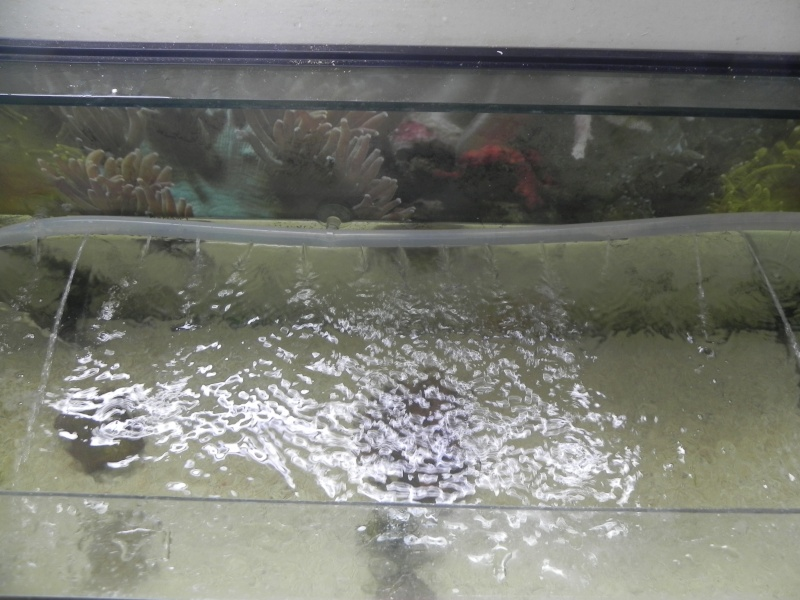 200 litres spé de Néo Dscn6910