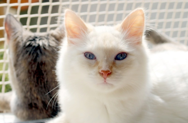 Photos des chats sauvés, avant/après - Page 10 Copie578