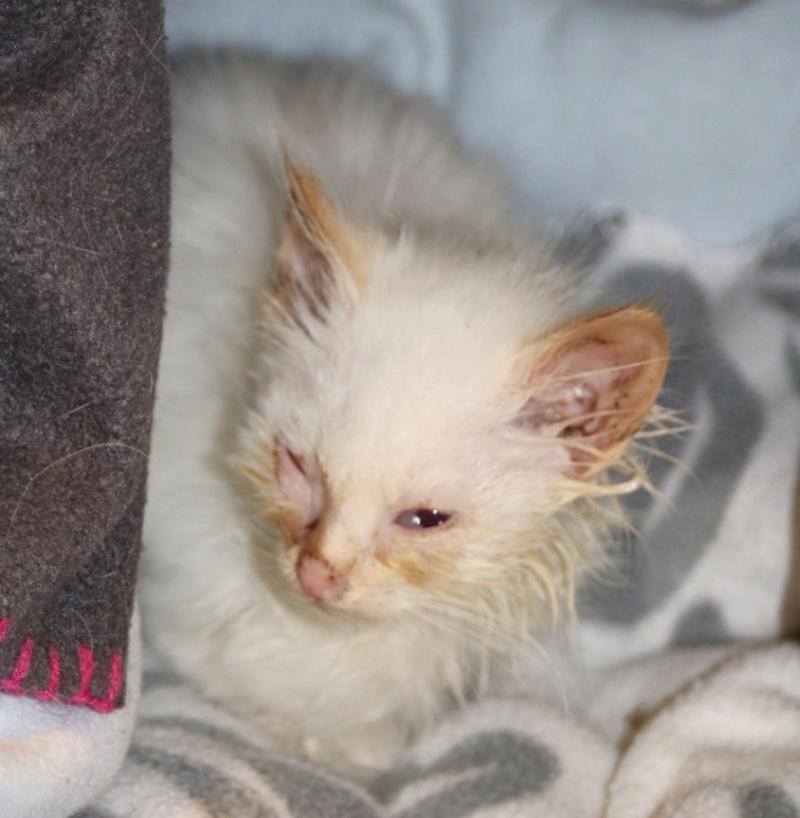 Photos des chats sauvés, avant/après - Page 10 Copie659
