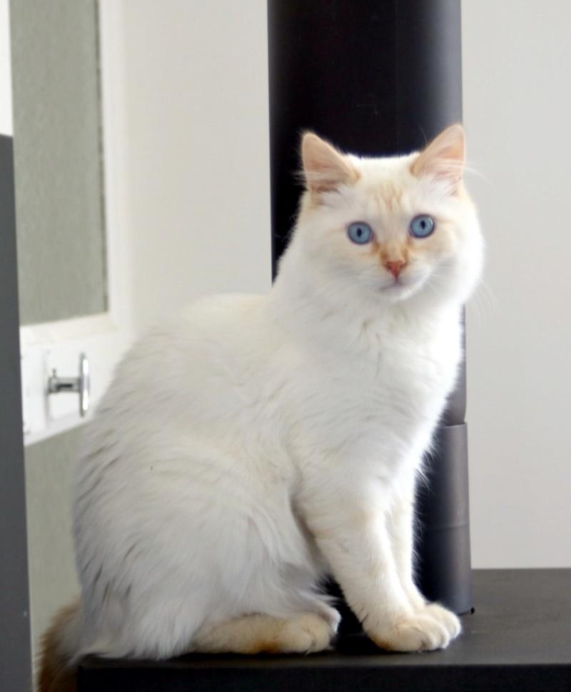 Photos des chats sauvés, avant/après - Page 10 Copie661