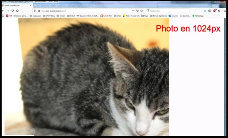 Comment insérer une photo - Page 2 Insere16