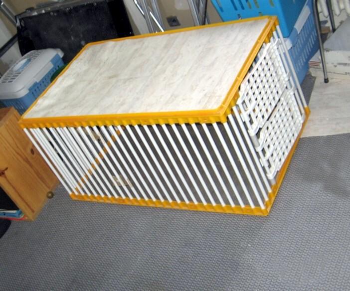 Mettre un chat dans une caisse de transport Mettre10