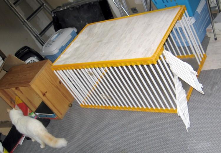 Mettre un chat dans une caisse de transport Mettre11