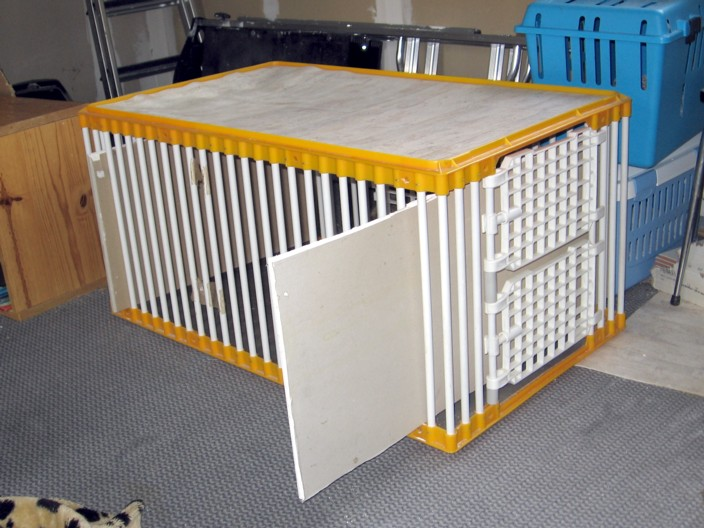 Mettre un chat dans une caisse de transport Mettre13